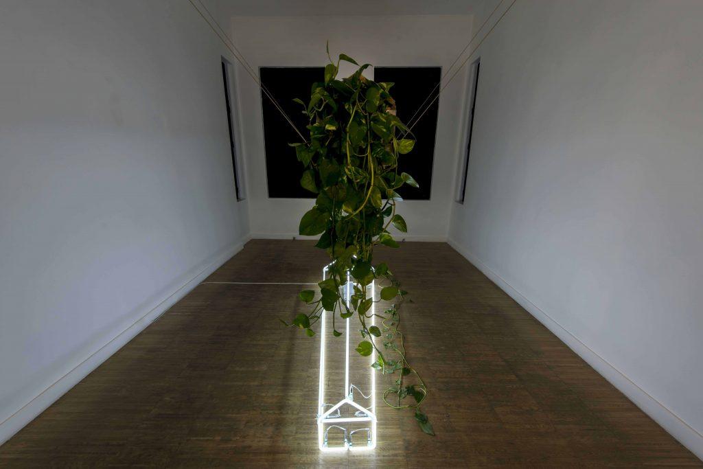 Işıklar İçinde Uyu, 2018, Coffin, Neon, Ivy,  170x62x200 cm,